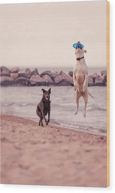 Dog With Frisbee Wood Print