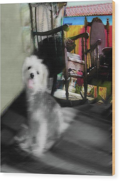 Dogie In The Patio Art  Wood Print