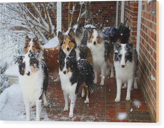 Dogs During Snowmageddon Wood Print