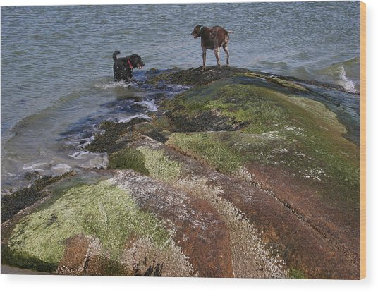 Dogs On The Rocks Wood Print by Rose Martin