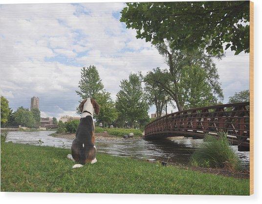 Dog's View Wood Print