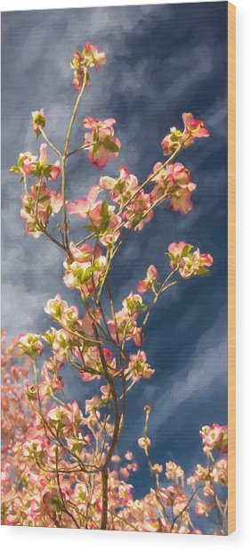 Dogwood 5 Wood Print