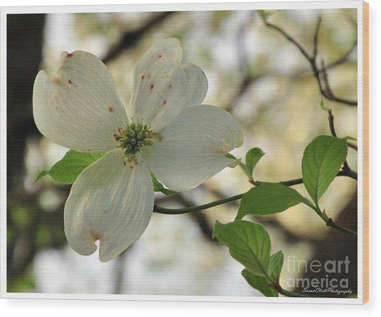 Dogwood Bloom Wood Print