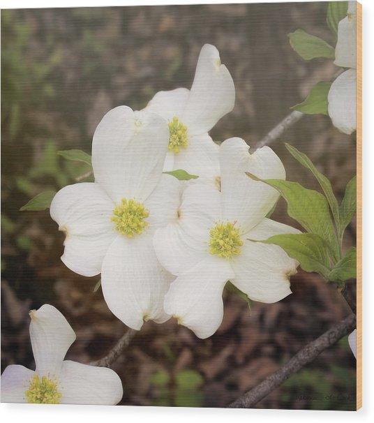Dogwood Blossom Trio Wood Print