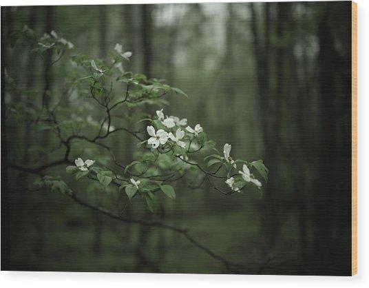Dogwood Branch Wood Print