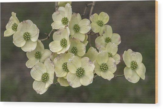Dogwood Dance In White Wood Print