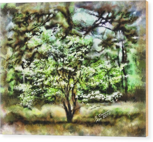 Dogwood On The Old Home Place Wood Print