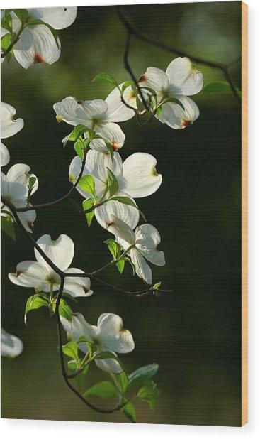 Dogwood Retrospective Wood Print