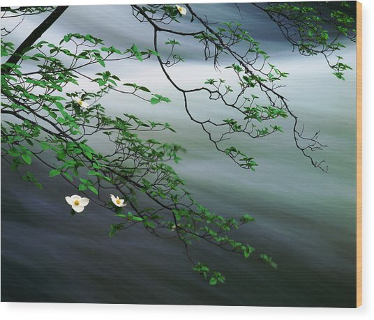 Dogwoods And Merced River Wood Print by Edward Mendes