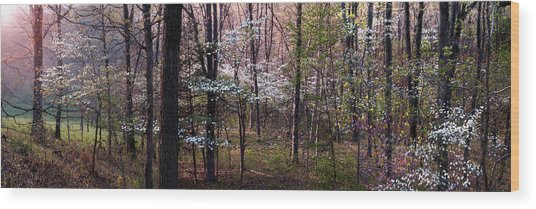 Dogwoods At Sunset Wood Print by Lloyd Grotjan