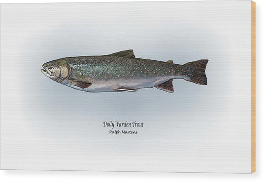 Dolly Varden Trout Wood Print