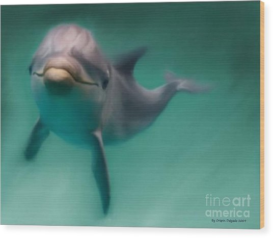 Dolphin  Wood Print by Crispin  Delgado