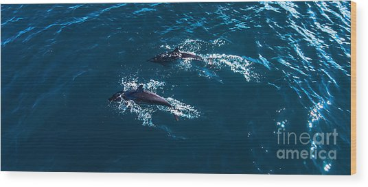Dolphin Pair Wood Print