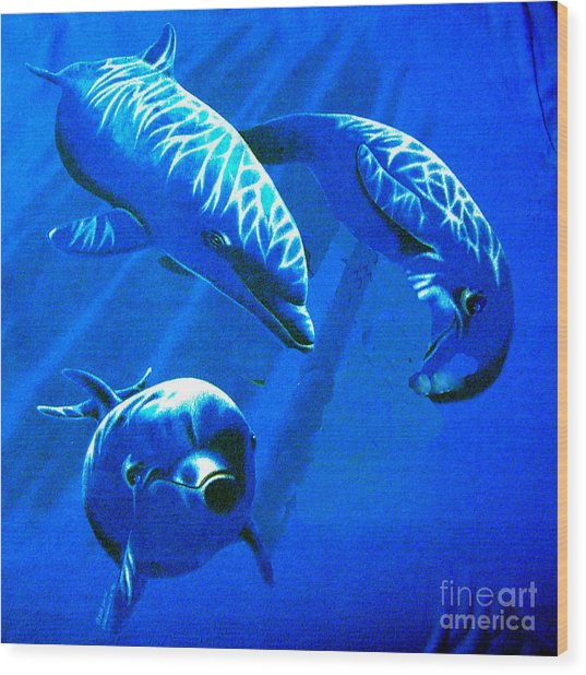 Dolphin Playing  Wood Print