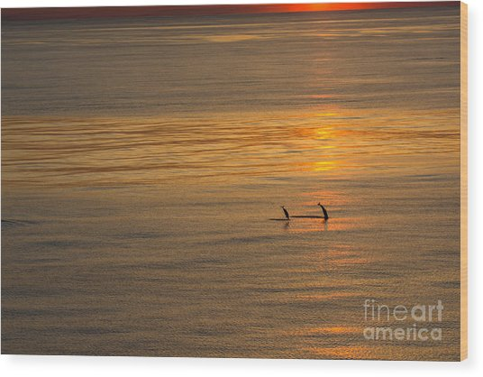 Dolphin Sunset Wood Print