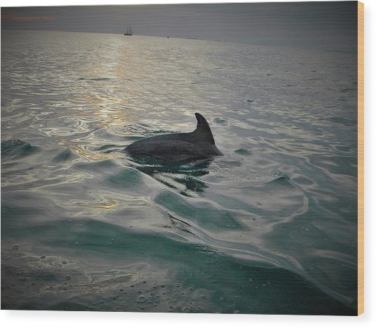 Dolphin Watching Wood Print
