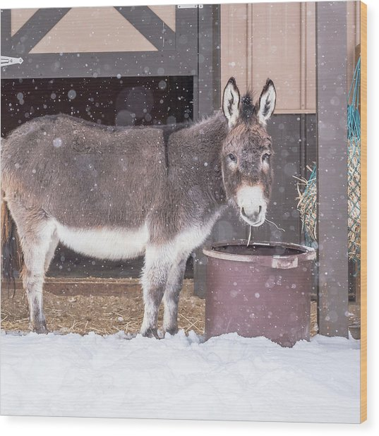 Donkey Watching It Snow Wood Print