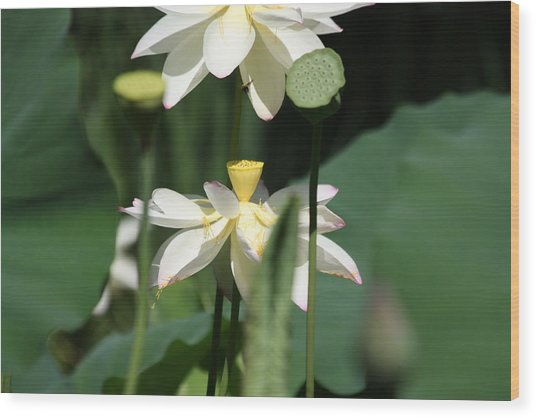 Double Blossom Wood Print by Dawn Davis