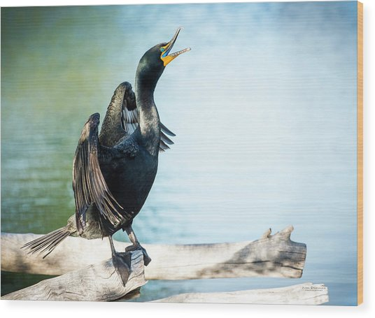 Double-crested Cormorant Wood Print