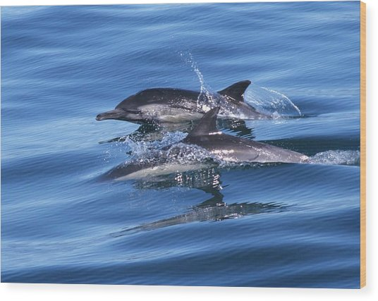 Double Dolphins And Reflections Wood Print