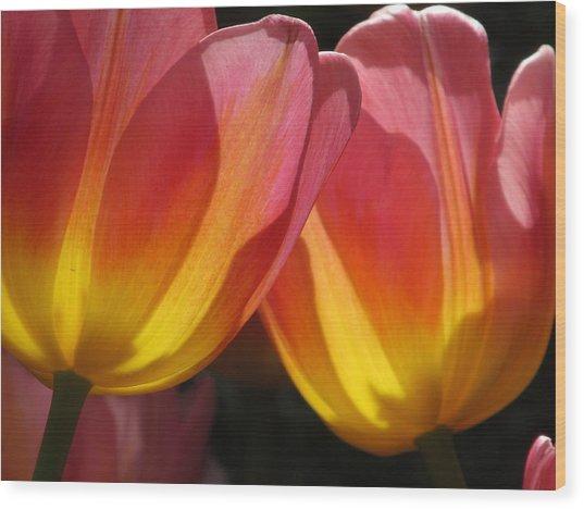 Double Tulips Wood Print