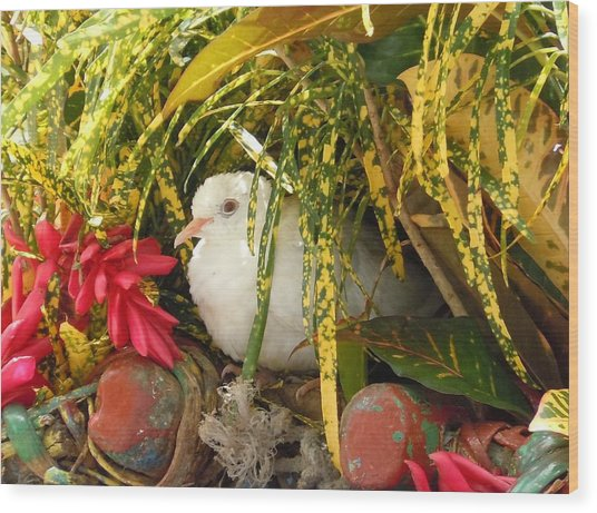 Dove In Jamaica Wood Print