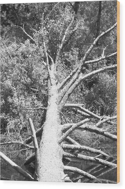 Down Tree Wood Print by Derek Clark