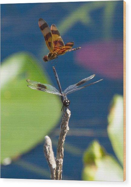 Dragon Fly 195 Wood Print