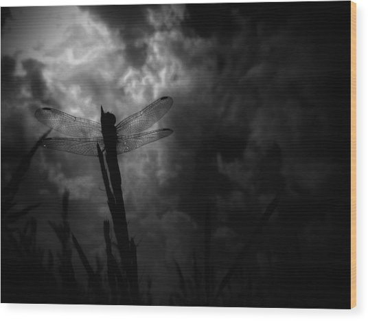 Dragon Noir Wood Print