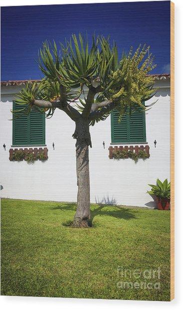 Dragon Tree Garden House Wood Print