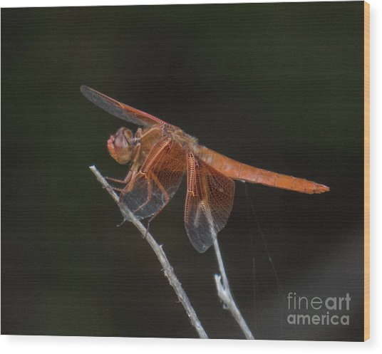 Dragonfly 11 Wood Print