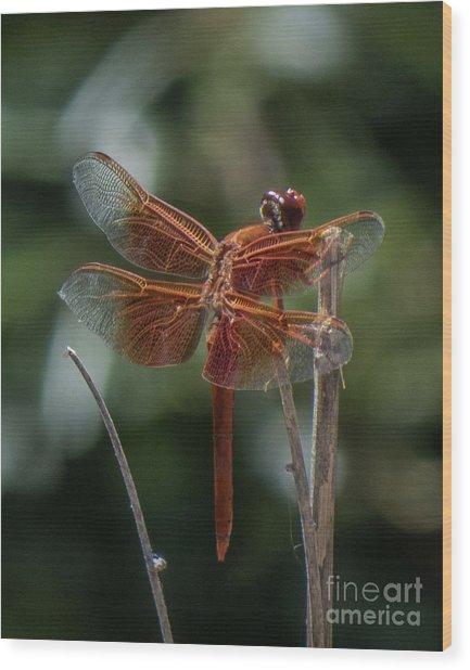 Dragonfly 9 Wood Print