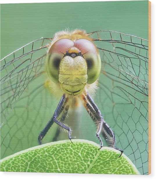 Dragonfly Face Wood Print by Jim Hughes
