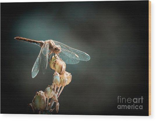 Dragonfly Wood Print by Gabriela Insuratelu
