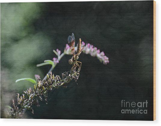 Dragonfly II Wood Print