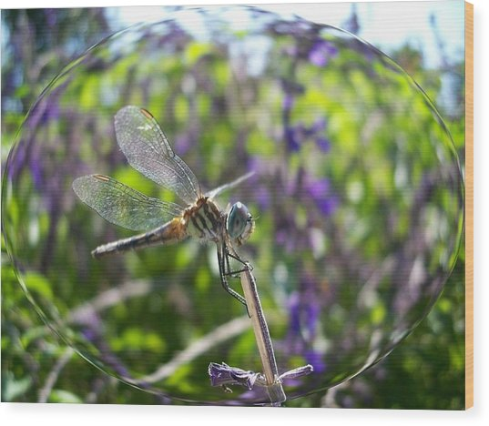 Dragonfly In Bubble Wood Print
