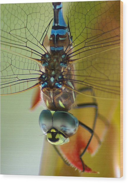 Dragonfly In Thought Wood Print