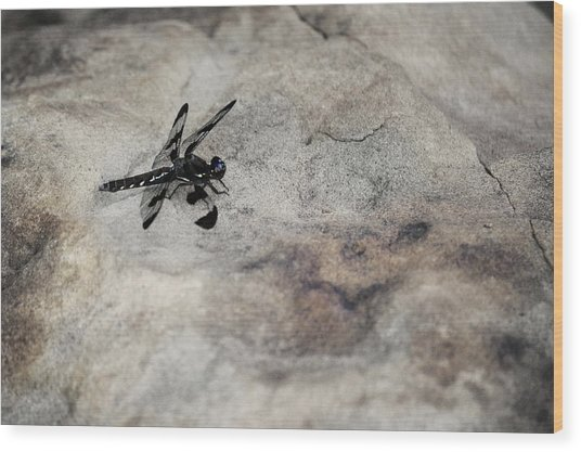 Dragonfly Landed On The Rock Wood Print
