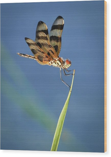 Dragonfly On Blue Wood Print