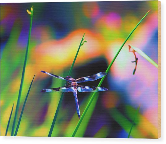 Dragonfly On Pastels Wood Print by Bill Tiepelman