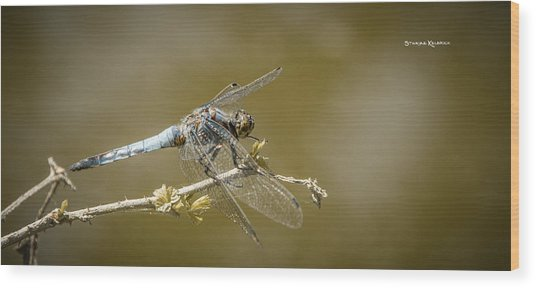 Wood Print featuring the photograph Dragonfly On The Spot by Stwayne Keubrick