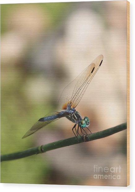Dragonfly Ref.13 Wood Print by Robert Sander