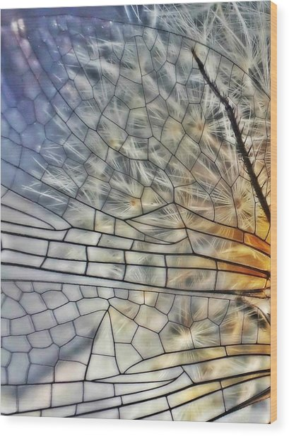 Dragonfly Wing Wood Print