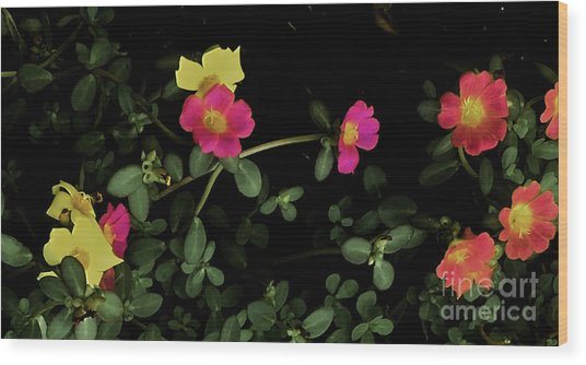Dramatic Colorful Flowers Wood Print