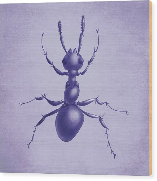Drawn Purple Ant Wood Print
