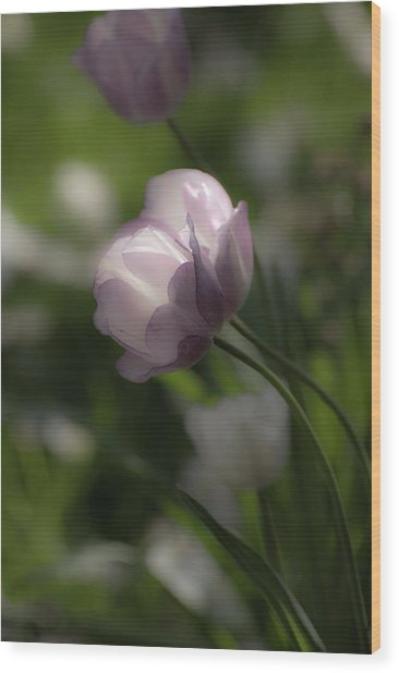 Dream Tulip Wood Print