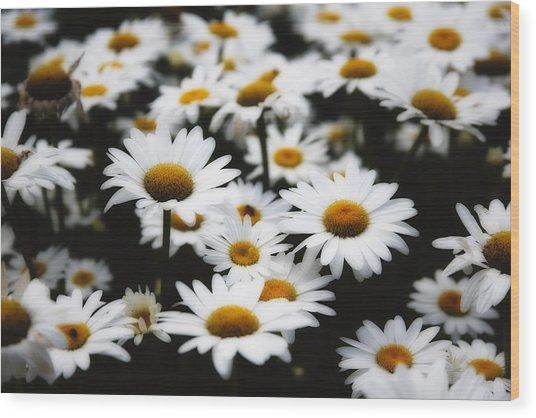 Dreaming Daisies Wood Print by George Oze