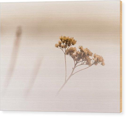 Dreaming Of Spring Wood Print