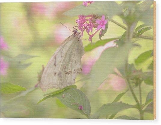 Dreamy Butterfly Wood Print