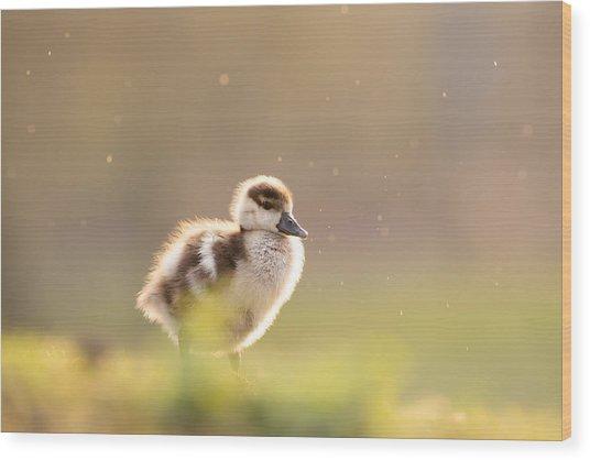 Dreamy Duckling Wood Print